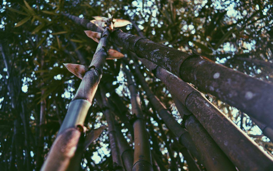 Kompas: Gubernur NTT: Mari Tanam Bambu demi Keselamatan Alam Kita
