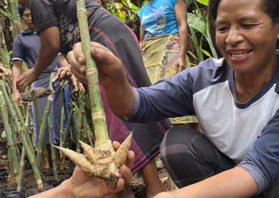 Bamboo Treatment Manual
