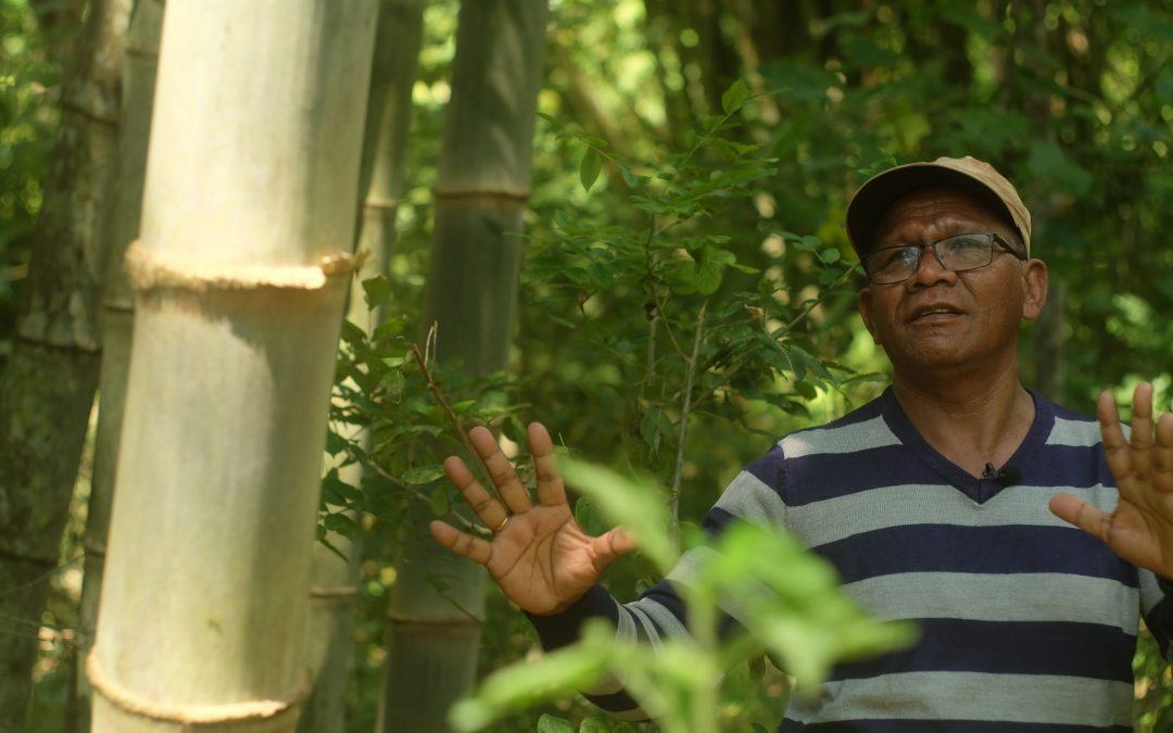 Indonesia plants bamboo to fight climate change